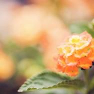 orangeyellowgreen